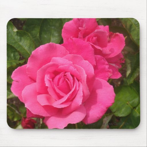 Sweet Pink Roses Mouse Pad