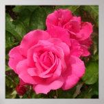 Sweet Pink Roses Print