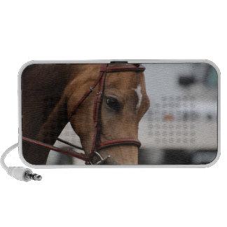 Sweet Pony  Speakers