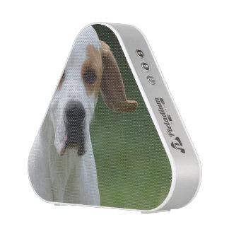 Sweet Portuguese Pointer Dog