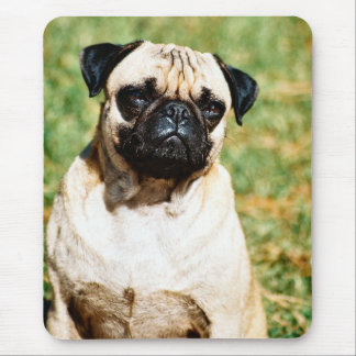 Sweet Pug Dog Photo Cards and Gifts Mousepad