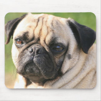 Sweet Pug Dog Photo Cards and Gifts Mousepads