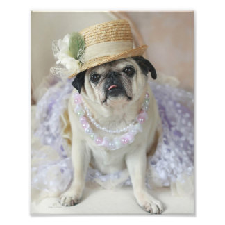 Sweet Pug in Straw Hat Print Photographic Print