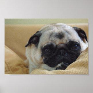 Sweet Pug Poster