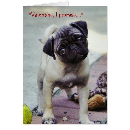 Sweet Pug Puppy Valentine #1 Greeting Card