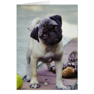 Sweet Pug Puppy Valentine #2 Greeting Card
