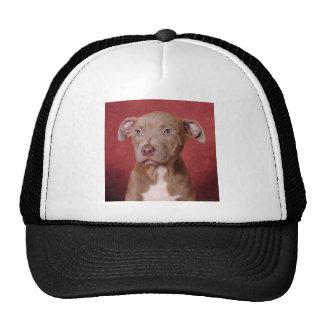 Sweet pup cap