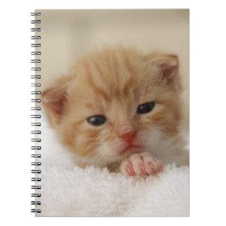 Sweet puppy kitty notebook