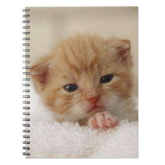 Sweet puppy kitty notebooks