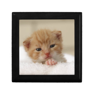 Sweet puppy kitty small square gift box