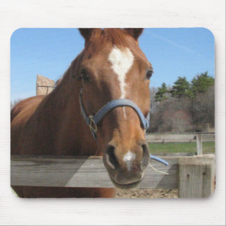 Sweet Quarter Horse Mouse Pad