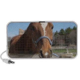 Sweet Quarter Horse Speakers
