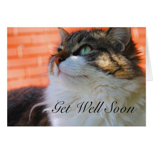 Get Well Soon Card Cat