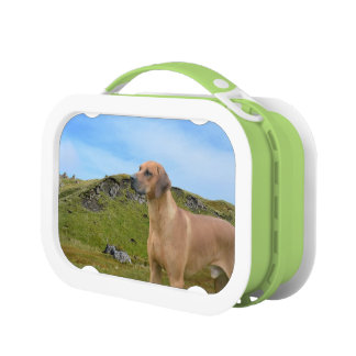 Sweet Rhodesian Ridgeback Dog Lunch Box