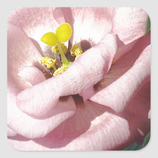 Sweet rose flower square stickers