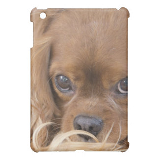 Sweet Ruby Cavalier King Charles Spaniel Cover For The iPad Mini