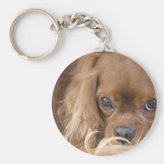 Sweet Ruby Cavalier King Charles Spaniel Key Ring