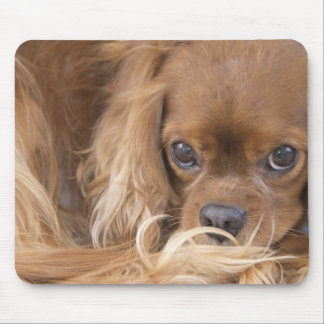 Sweet Ruby Cavalier King Charles Spaniel Mouse Mat