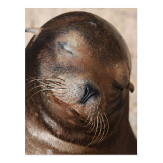 Sweet Sea Lion Postcard