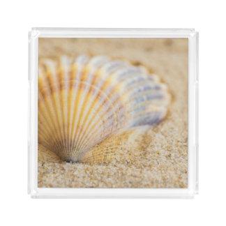 Sweet Seashell