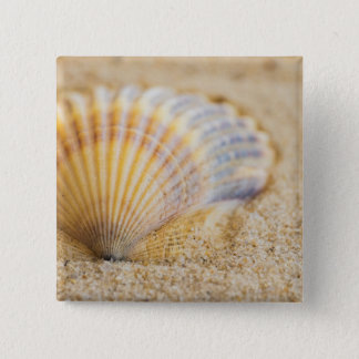 Sweet Seashell 15 Cm Square Badge