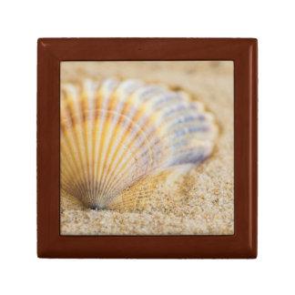 Sweet Seashell Gift Box