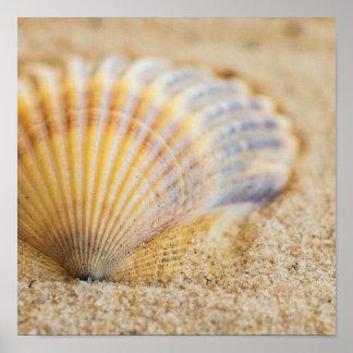 Sweet Seashell Poster