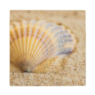 Sweet Seashell Wood Coaster