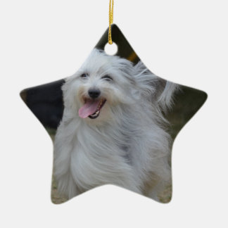 Sweet Sheepdog Ceramic Star Decoration