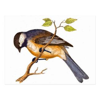 Sweet Siberian Bird Postcard