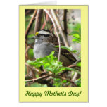 Sweet Sparrow for Mother's Day