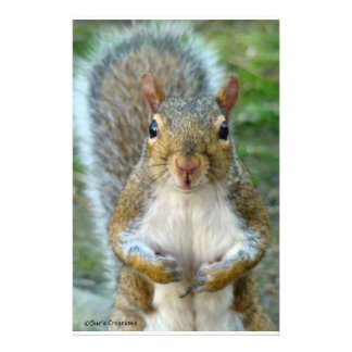 Sweet Squirrel Face Stationery