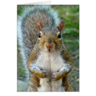 Sweet Squirrel Face vertical Greeting Cards