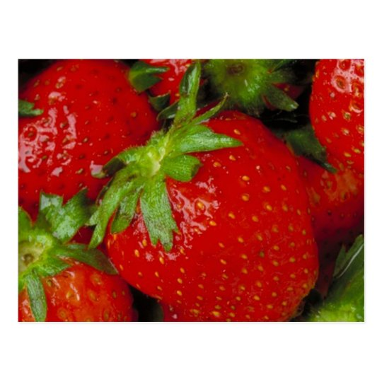 Sweet Summer Strawberries Postcard