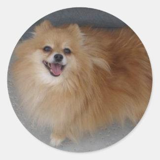 Sweet Sushi - Pomeranian Stickers