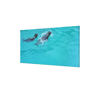 Sweet Swimming Seals Couple, canvas Canvas Print