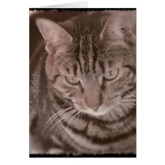 Sweet Tabby Cat card