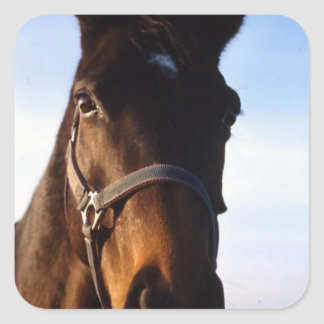 Sweet Thoroughbred Horse Stickers