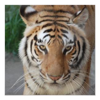 Sweet Tiger 13 Cm X 13 Cm Square Invitation Card