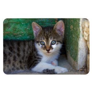 Sweet Tiger Cat Baby Rectangle Magnet