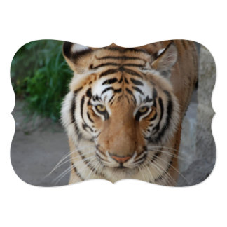 "Sweet Tiger 5"" X 7"" Invitation Card"