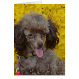 Sweet Tiny Brown Poodle Greeting Card
