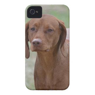 Sweet Vizsla iPhone 4 Cases