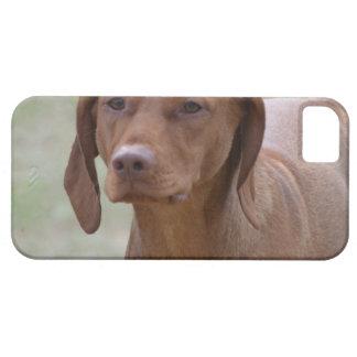 Sweet Vizsla iPhone 5 Case