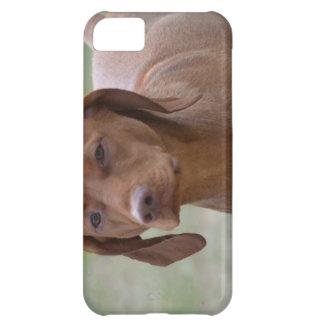 Sweet Vizsla iPhone 5C Case