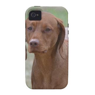 Sweet Vizsla iPhone 4/4S Case