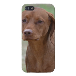 Sweet Vizsla iPhone 5 Cases