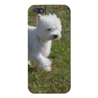 Sweet West Highland Terrier iPhone 5/5S Cover