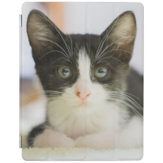 Sweet White And Black Kitten iPad Cover