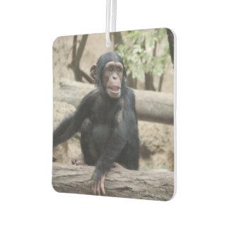 Sweet youmg Chimpanzee